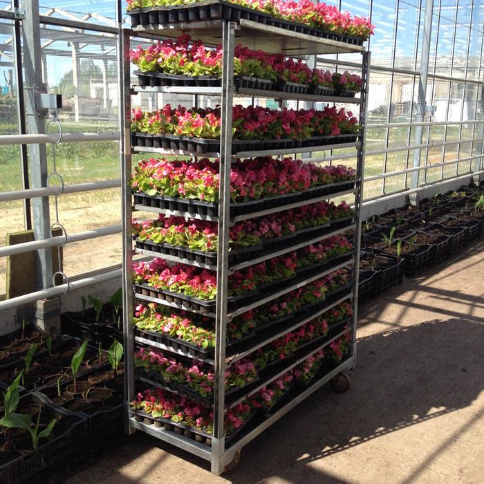 Рассада цветов с доставкой недорого