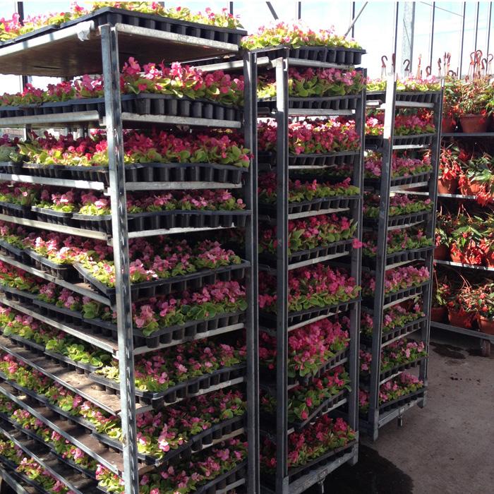 Саженцы цветов купить в москве