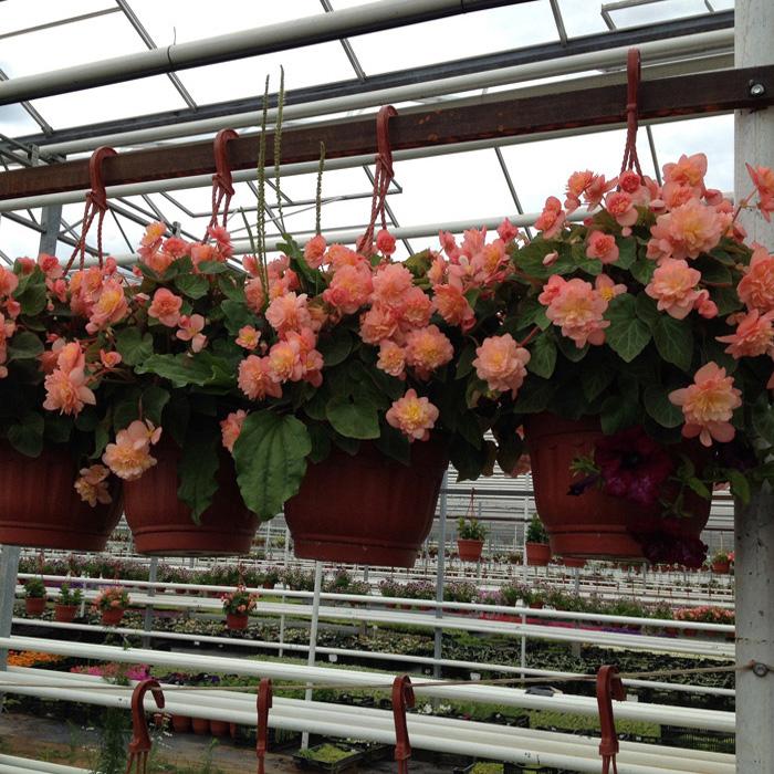 Рассада однолетних цветов фото с названиями 64