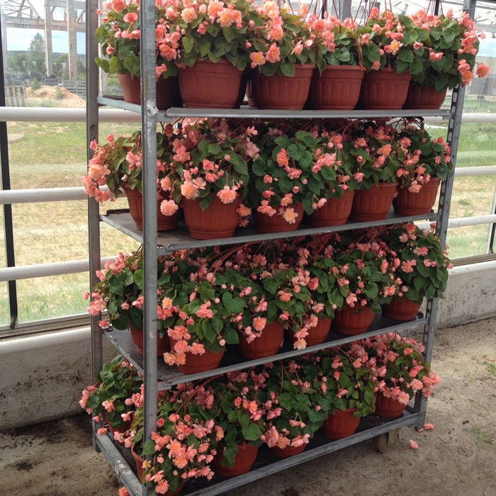 Цветы для рассады с доставкой 79
